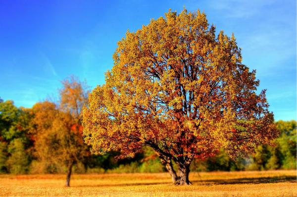 tree 99852 1280  pixabay